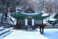 서울시 창덕궁 부용정 구경하기